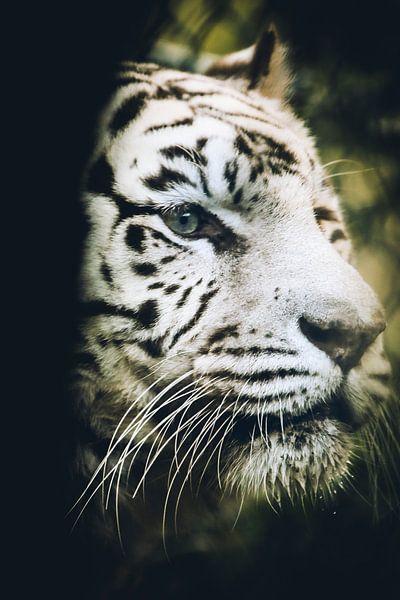 White tiger van Mark Zanderink