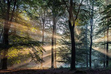 Zonnestralen in het Bos (1) van