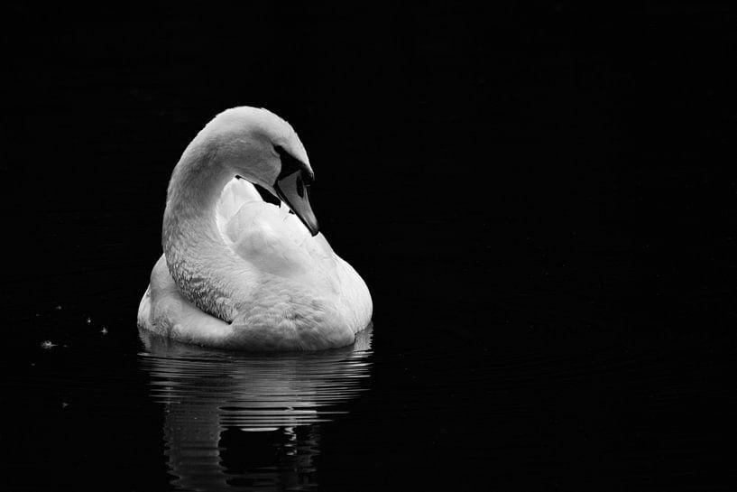 White Swan in Black van Niels Eric Fotografie