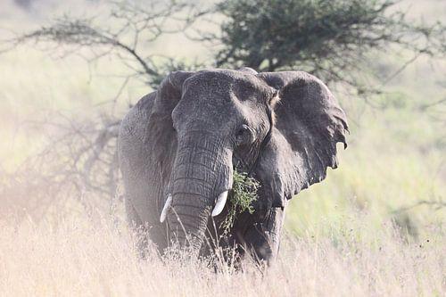 Romantic Elephant