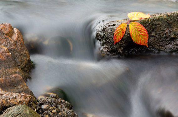 Herfst  van Patrick Brouwers