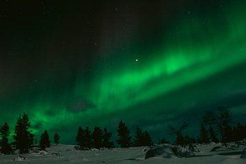 Noorderlicht in Fins Lapland || Poolcirkel, Finland
