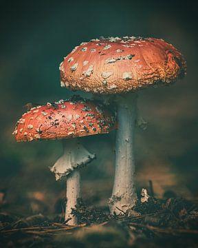 In de herfst van hun bestaan van Marcel Bakker