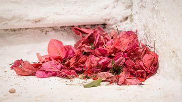 Rode blaadjes van de bougainville in een Grieks portiek van Michel Seelen