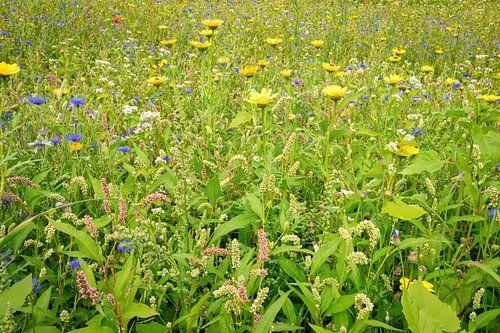 Variatie wilde bloemen van