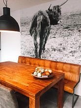 Kundenfoto: Schottisches Hochlandrind 002 von Carola Stroy, auf nahtlose tapete