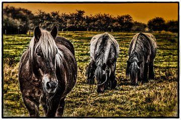 paarden van Wim de Vos