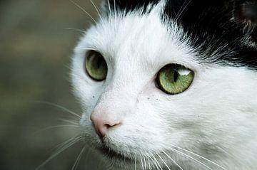 Nahaufnahme einer Katze mit schönen grünen Augen von Ezra Middelburg