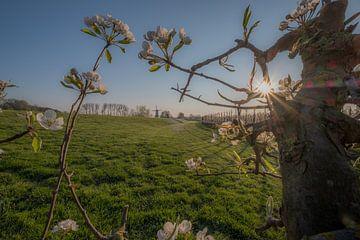 Bloesem fruitboom en molen 01 von Moetwil en van Dijk - Fotografie