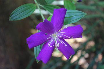 Violette Blume von ByMadelon