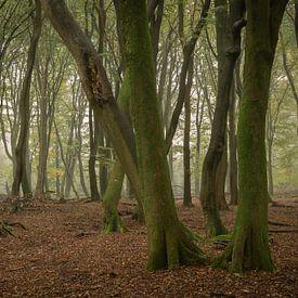 Tanzende Bäume von Jan Koppelaar