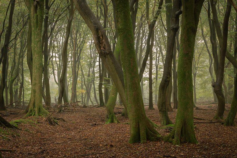 Des arbres qui dansent sur Jan Koppelaar