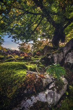 Forêt des Asturies avec des plantes sur Jean Claude Castor