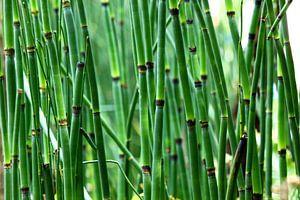 Bamboe bos van