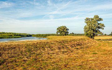 Sommer im Biesbosch von Ruud Morijn