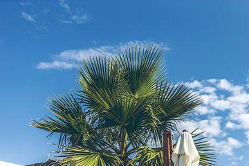 Palmboom aan de blauwe lucht van