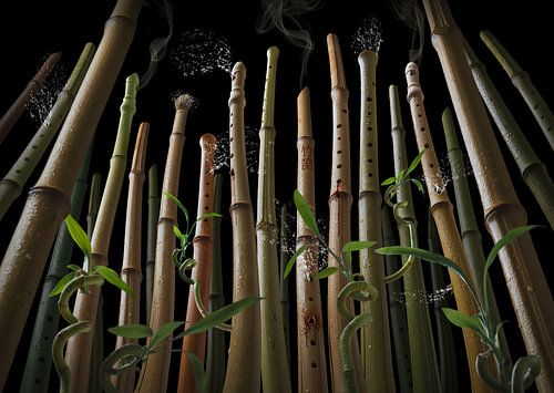 Bamboo flute forest van