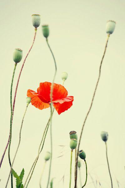 Poppies beeld van Falko Follert
