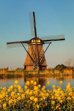 Windmühle und Blumen bei Sonnenuntergang, Kinderdijk, Niederlande von Markus Lange