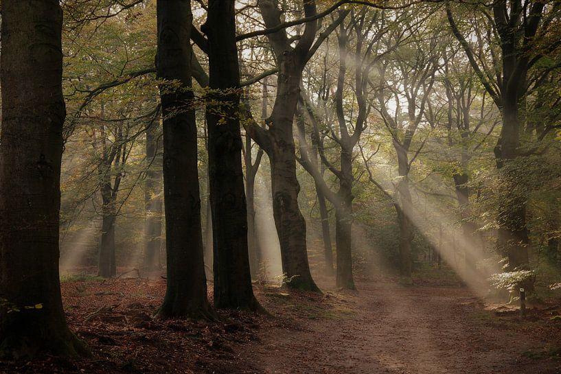 Herfst sfeer van Rob De Jong