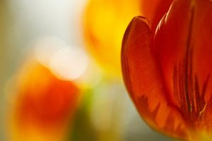 Rood en geel