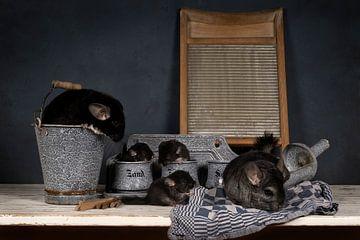 Familie van grijze en zwarte chinchillas met babies in een huislijke setting met ouderwetse keukensp van Leoniek van der Vliet