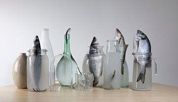 Morandi et le poisson sur gelske kwikkel