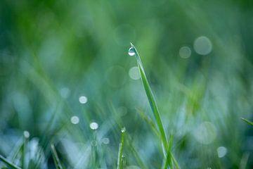 Raindrop sur Jessica Van Wynsberge
