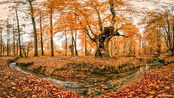 Herfst bos panorama van videomundum