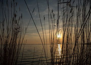 Das Amstelmeer durch das Schilf von Natascha Worseling