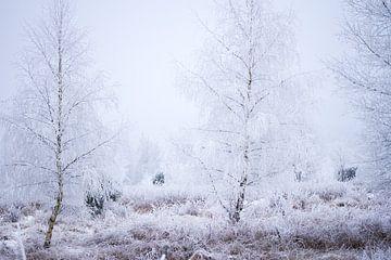 Winterlandschaft in Drenthe von Karijn Seldam