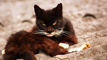 Angry cat van Anneke Verweij