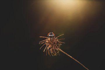 poserend lieveheersbeestje van Ribbi The Artist