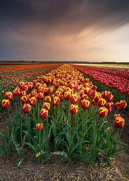 Noord Holland bloeit van Klaas Fidom