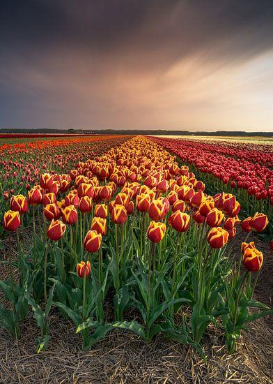 Noord Holland bloeit