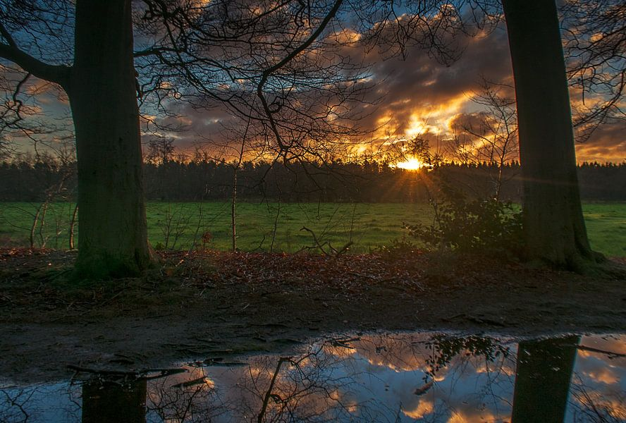De bosrand van Robin Pics (verliefd op Utrecht)