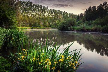 Am See von Wim van D