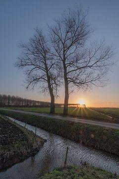 Bomen bij Ingen / Betuwe van Moetwil en van Dijk - Fotografie