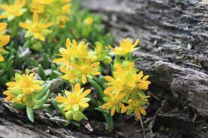 Flowers in Austria
