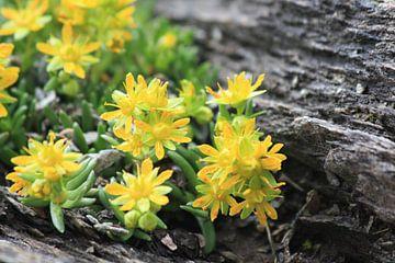 Flowers in Austria von Leontien van der Willik-de Jonge
