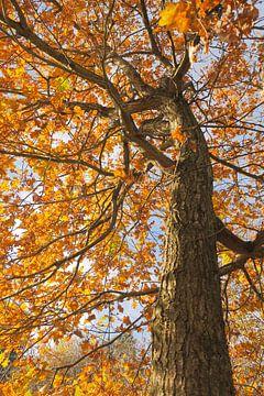 Herfst boom van Nicole Nagtegaal