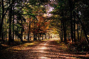 Bospad in de herfst || Nederlandse landschappen, Brabant