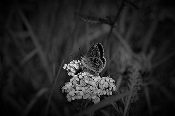Schmetterlinge von MartinsPhotocorner