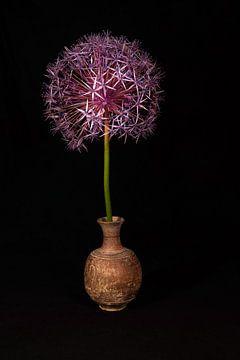 Blume von vorne von Roland de Zeeuw fotografie