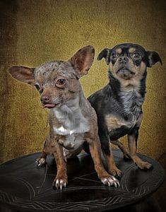 twee honden poseren