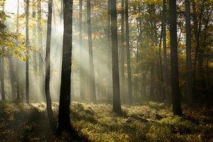 Forêt de fées dans le brouillard en automne sur Sran Vld Fotografie