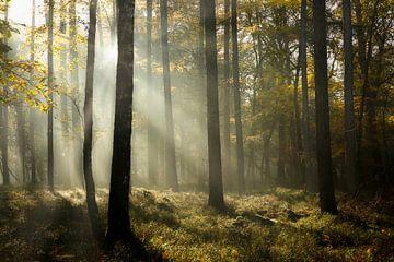 Feenwald im Nebel im Herbst von Sran Vld Fotografie