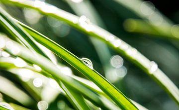 Regendruppels op grassprieten van Nannie van der Wal