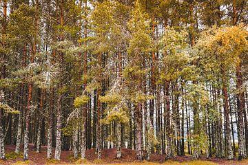 bomen in de herfst van Thea.Photo