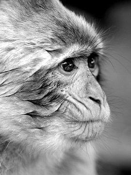 Makaak aapje  von Margreet van der Voort